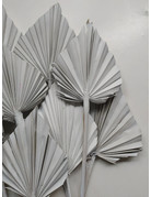 PAMPASKONING PALM SPEARS   GRAY