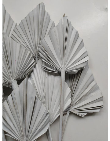PAMPASKONING PALM SPEARS | GRAY