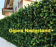 Gipea Easy To Fix Optimal Visibility Protection For Gate & Fence Als u de poort wenst te blinderen is onze kunsthedera een perfecte oplossing.