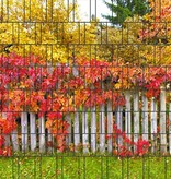 Gipea Easy To Fix Optimal Visibility Protection For Gate & Fence 3-d band herfst blad