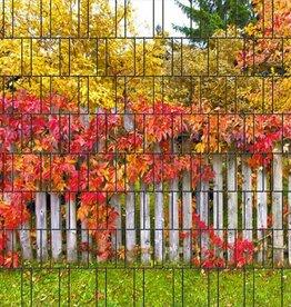 Gipea 3-d band herfst blad