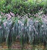 Gipea Gipea Easy Fix ( PANORAMA ) 1 paneel Flower
