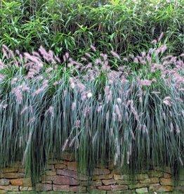 Gipea Easy Fix ( PANORAMA ) 1 paneel Flower
