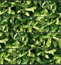 Tuinpoort dicht Gipea met 3-d band plus 20 klemmen ZW. Bladmotief