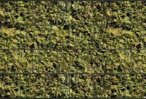 Tuinpoort dicht met 3-d band 10 meter plus 20 klemmen ZW.  Bladmotief