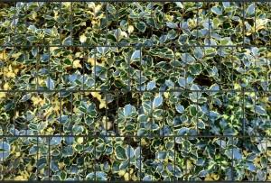 Tuinpoort dicht met 3-d  plus 20 klemmen Bladmotief