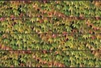 Gipea Tuinpoort dicht met 3-d band 155 plus 20 klemmen Bladmotief - Copy