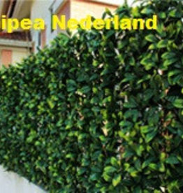 Gipea Easy To Fix Optimal Visibility Protection For Gate & Fence Gipea  Groenwanden  Buxes