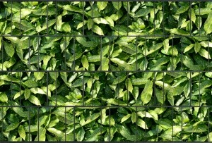 Gipea Gipea Design Band: Zichtbescherming Tuin, nu schutting zicht dicht met Aukube