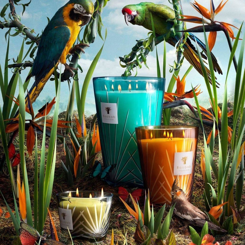 BAOBAB COLLECTION - Candle Palma Max 10-3
