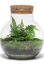 Workshop terrarium maken