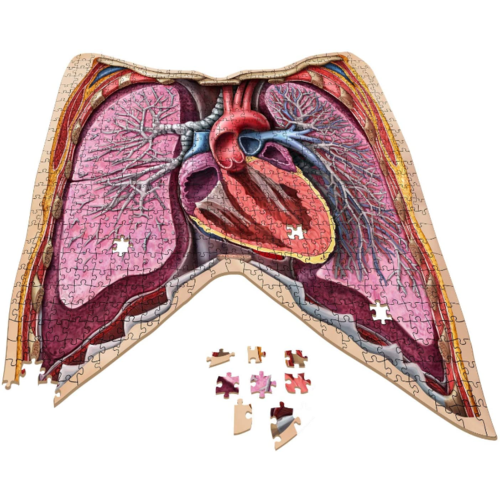 - The Human Thorax- Dr. Livingston's Anatomy Jigsaw Puzzle