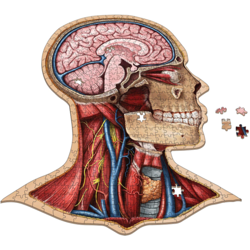 - The Human Head- Dr. Livingston's Anatomy Jigsaw Puzzle