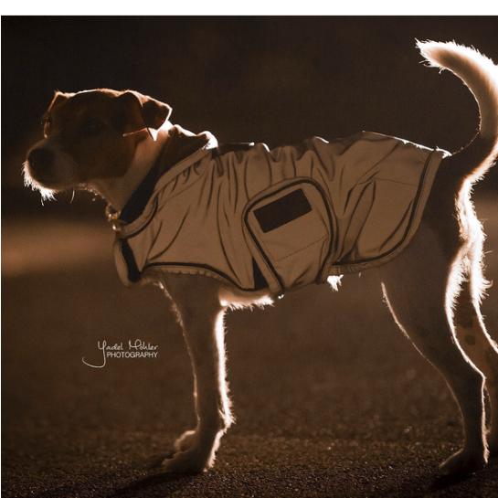 Dog Coat Reflective Water Repellent