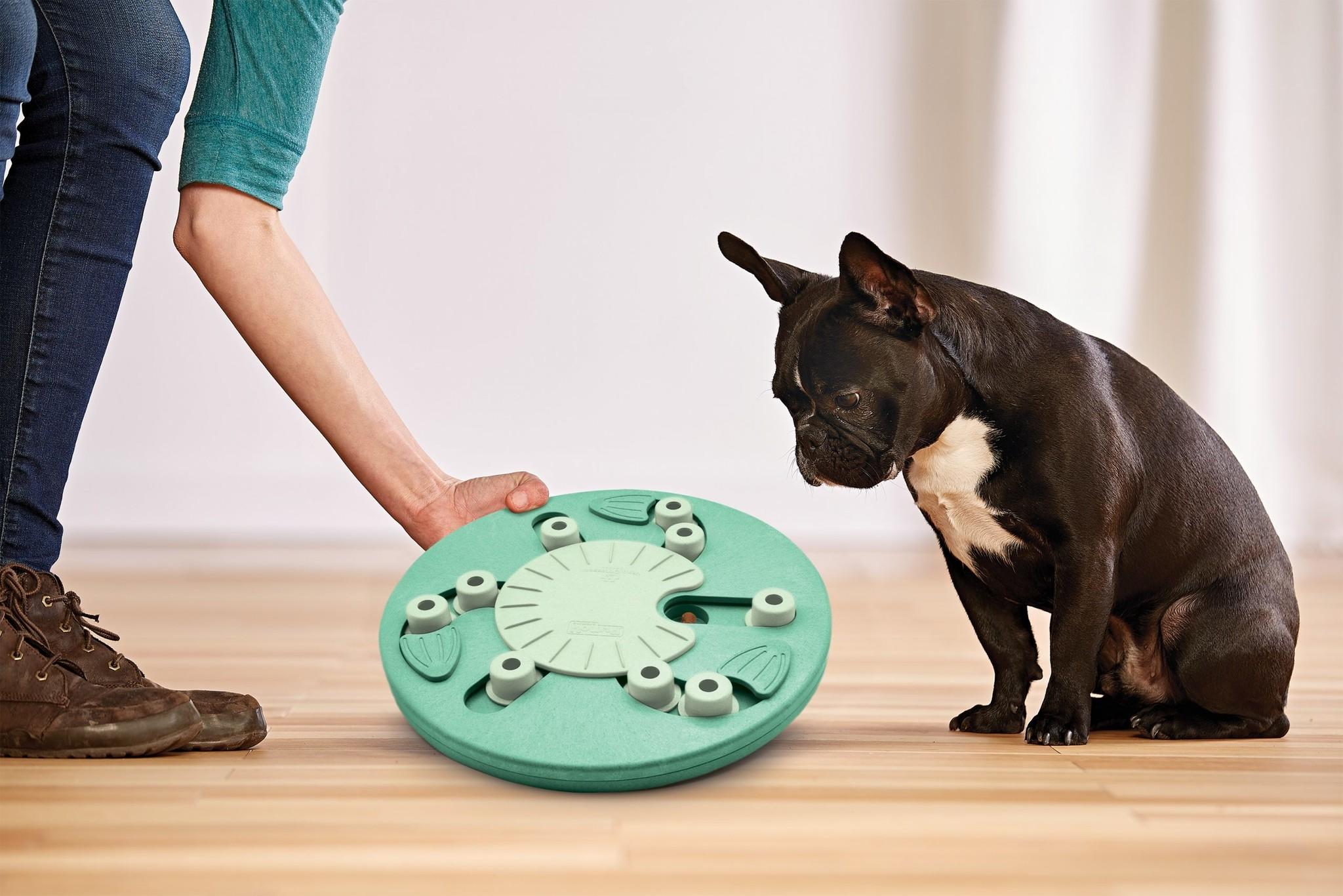 Dog Worker Composite