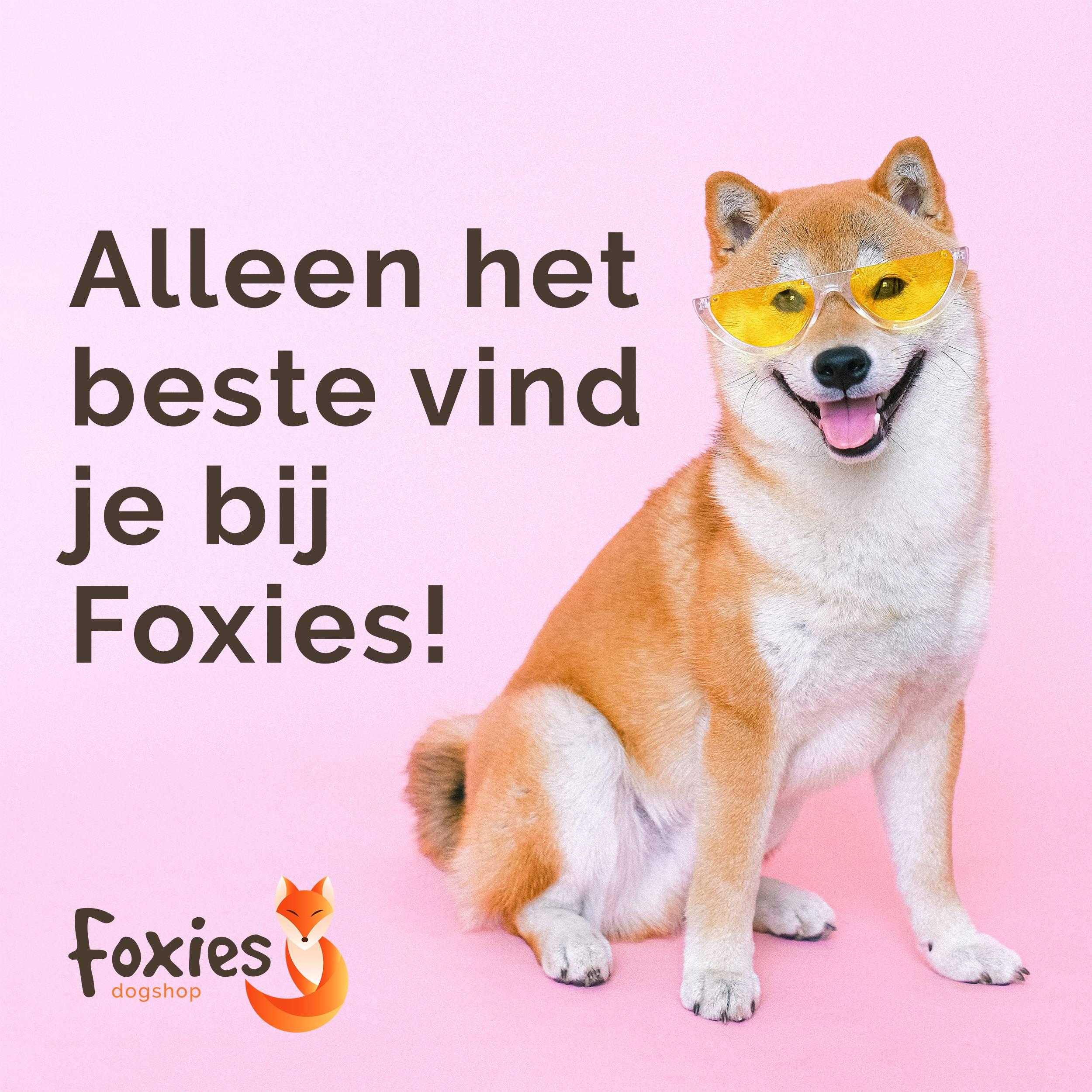 Foxies  dogshop instagram