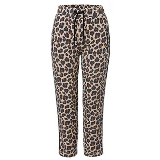 Frapp Broek Frapp leopard 2105203