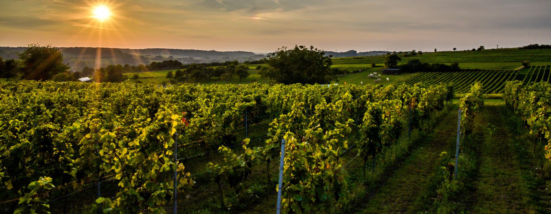 Late Harvest rode wijn