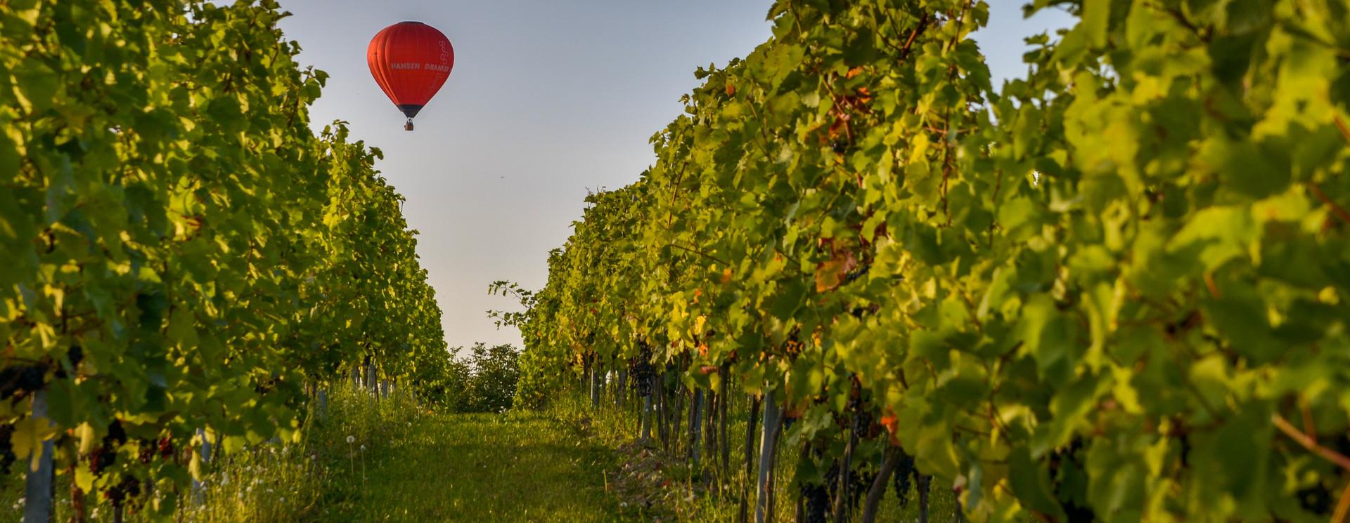 Late Harvest witte wijn