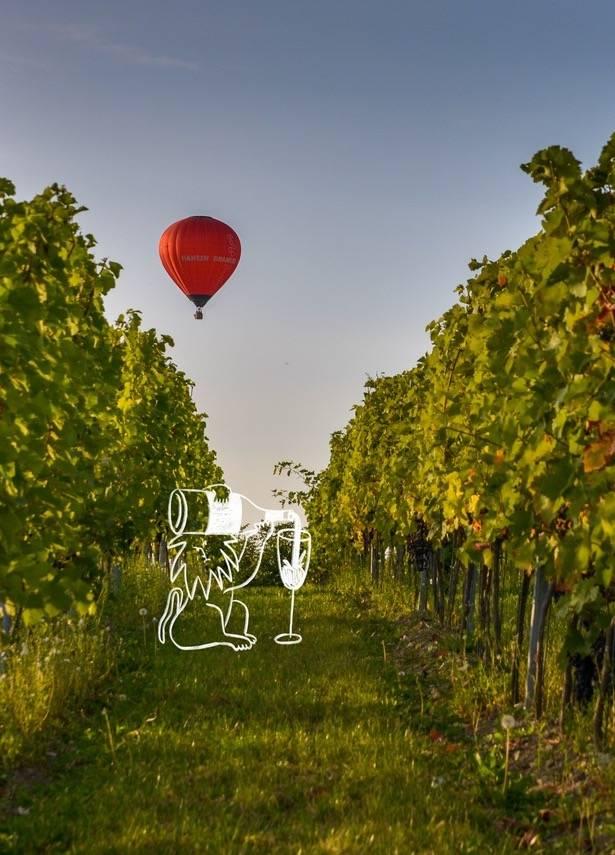 Zuid-Limburg is gemaakt voor wijnbouw-1