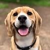 Traanvlekken bij honden behandelen en voorkomen