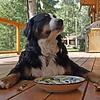 Hondenvoer en snacks
