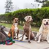 Hondenriemen en tuigjes