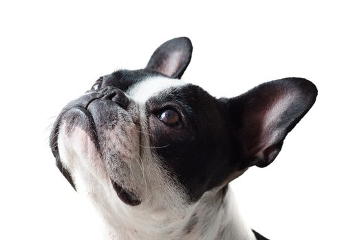 Hondenbenches en hokken