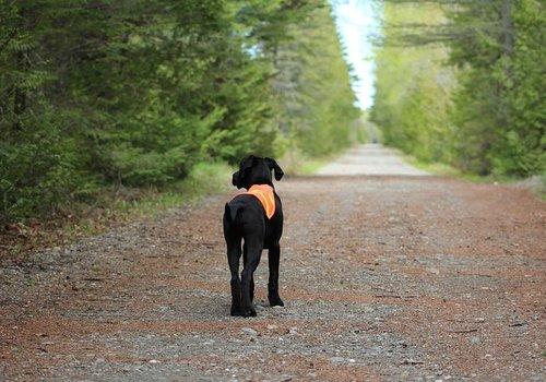 Hondenveiligheid