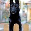 Hondenhekken en luiken