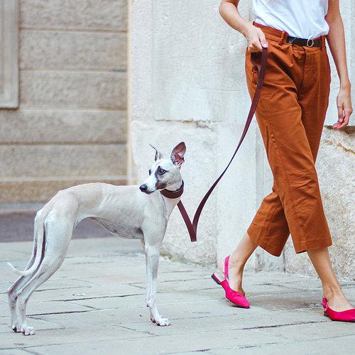 Ferplast Ferplast hondenhalsband Whippet 26 tot 32 cm leer donkerbruin