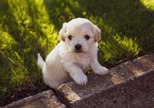 Hondenriem- en halsbandaccessoires