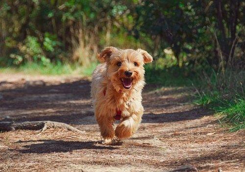 Hondenlijnen en -riemen