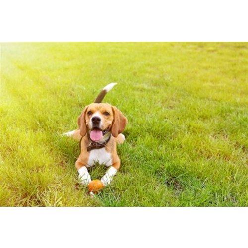 Happy pet Happy pet rubber bal assorti