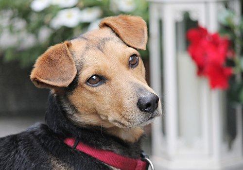 Hondenverlichting