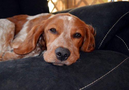 Hondenreflectievesten & -tuigjes