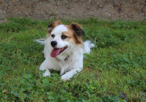 Hondenfietsbeugels