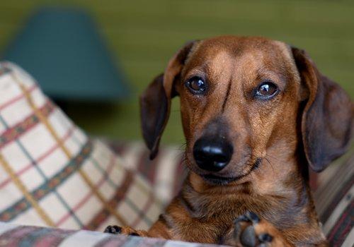 Hondendraagtassen