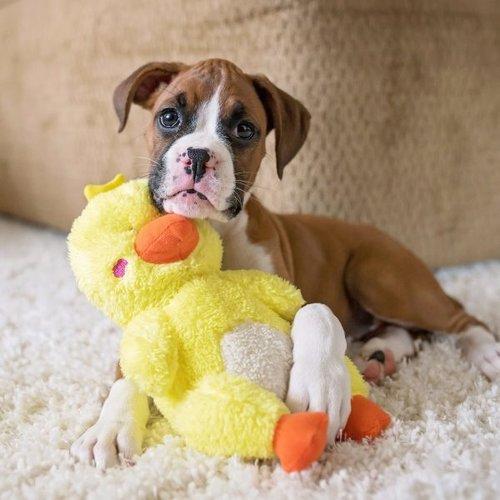Cheeky Chumz Cheeky Chumz - Eend - Hondenknuffel
