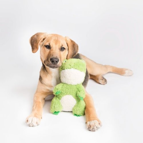 Cheeky Chumz Cheeky Chumz - Kikker - Hondenknuffel