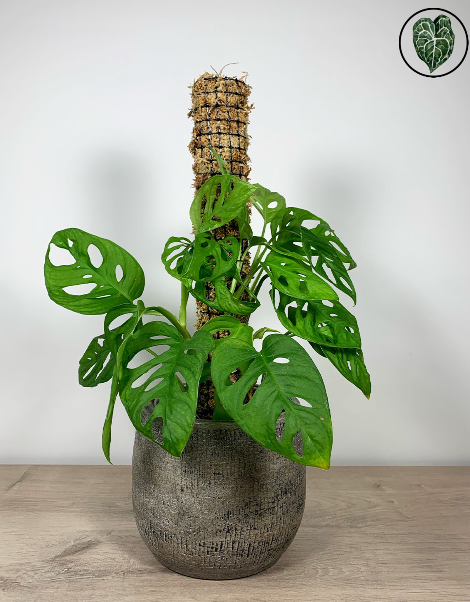 We Love Houseplants Zelfwatergevende mosstok