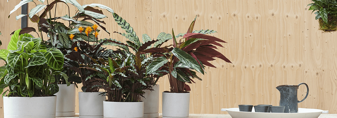 Houseplants for your urban jungle!