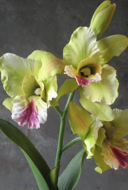 Zijden orchidee Catleya