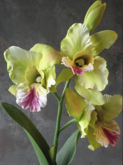 Zijden orchidee Catleya-1