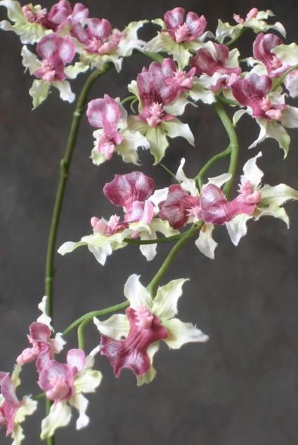 Zijden bloem Oncidium zacht groen roze-1