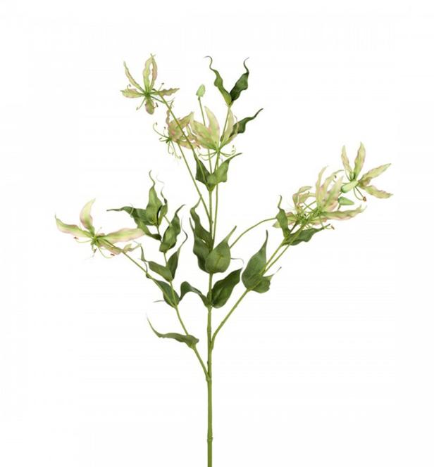 Zijden gloriosa-1