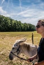De vliertuin Beleefbon ezelwandeling 2 uur 3 ezels