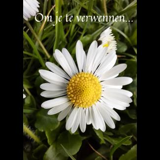 De vliertuin Wenskaart 'Om je te verwennen'