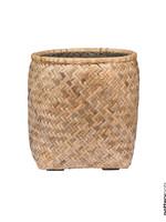 Potterypots Zayn M Bamboo