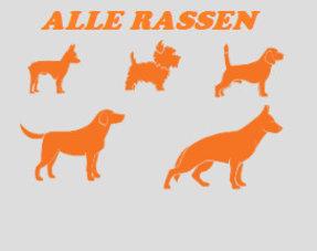 Alle Nylabones (Volwassen honden)